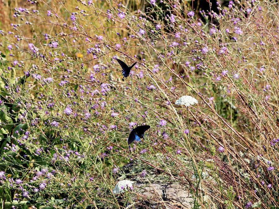 Blue Ridge Butterflies 4 by Matt Sexton