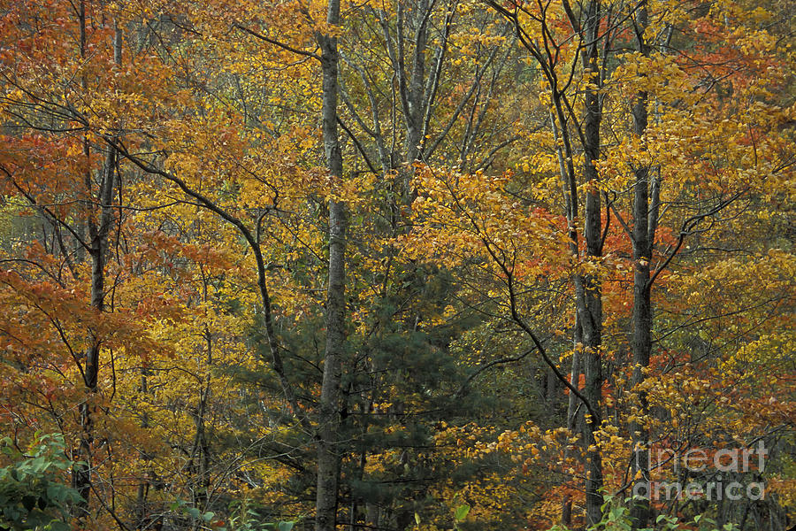 Tennessee Photograph - Blue Ridge Color by Stan and Anne Foster