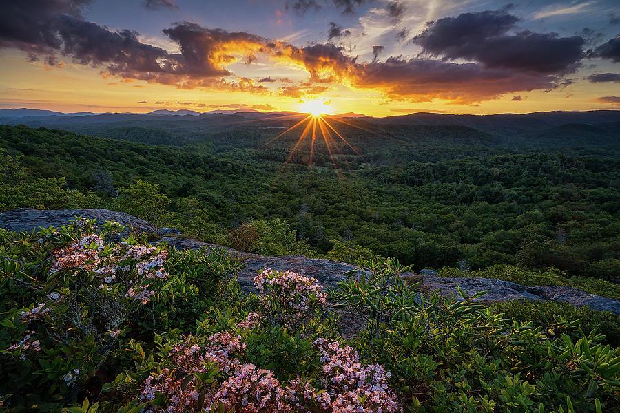 Blue Ridge Parkway Photograph - Blue Ridge Parkway - Mountain Laurel  by Jason Penland