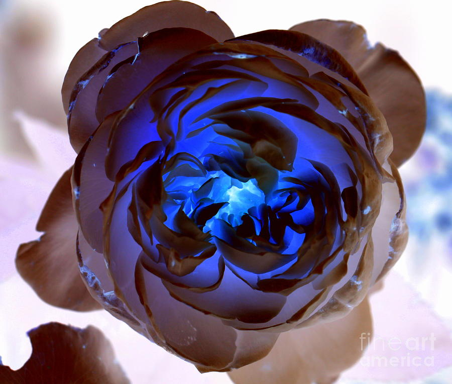 Inverted Colors Photograph - Blue Rose Glow by Carol Komassa