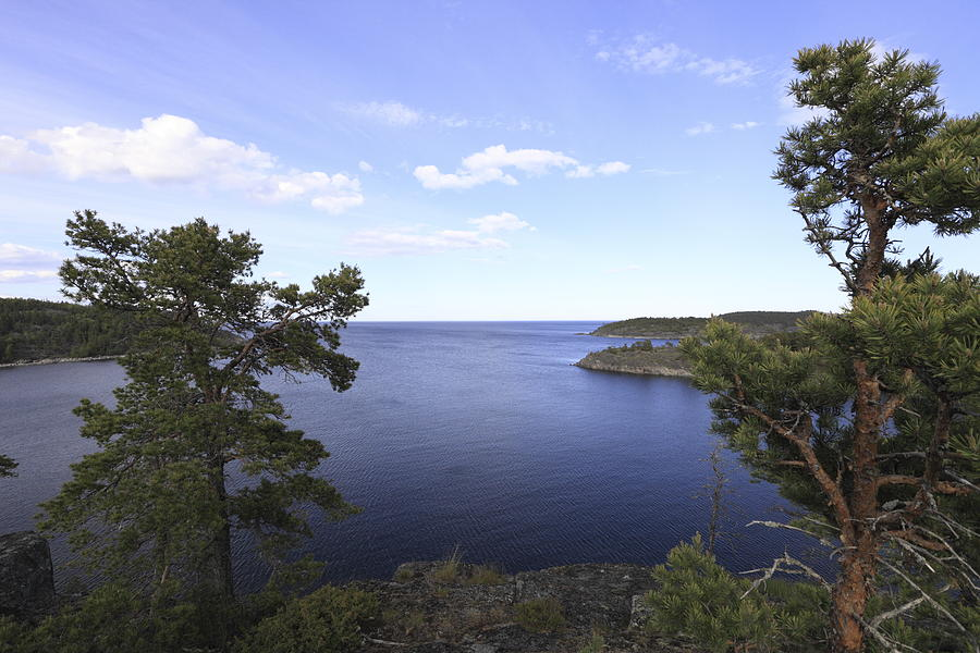 Baltic Sea Photograph - Blue Sea And Pine Trees by Ulrich Kunst And Bettina Scheidulin