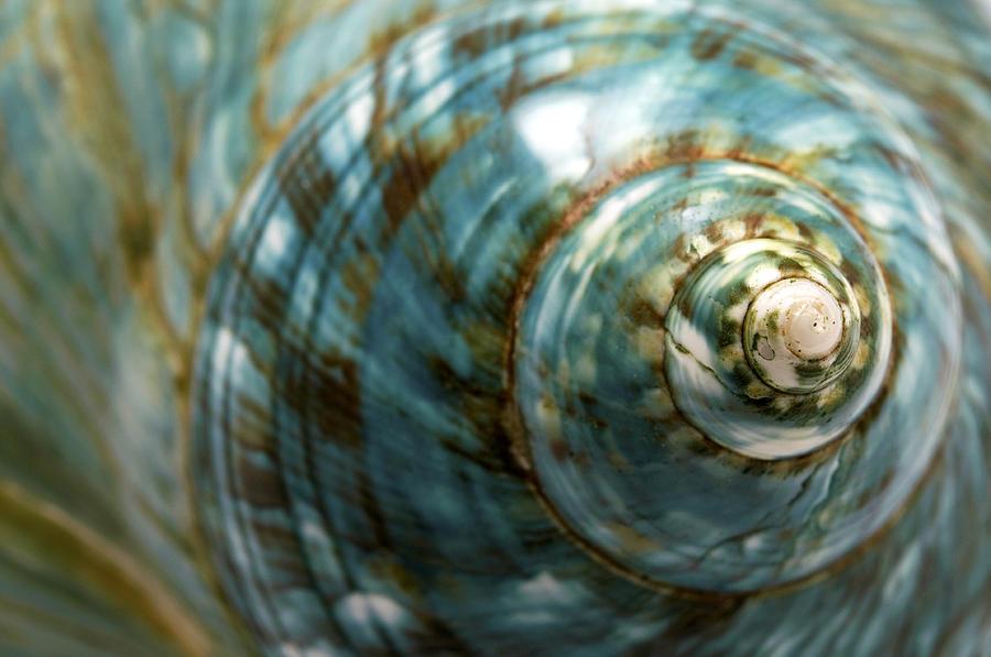 Macro Photograph - Blue Seashell by Fabrizio Troiani