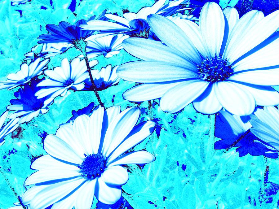 Blue Flowers Photograph - Blue Season by Ingrid Dance