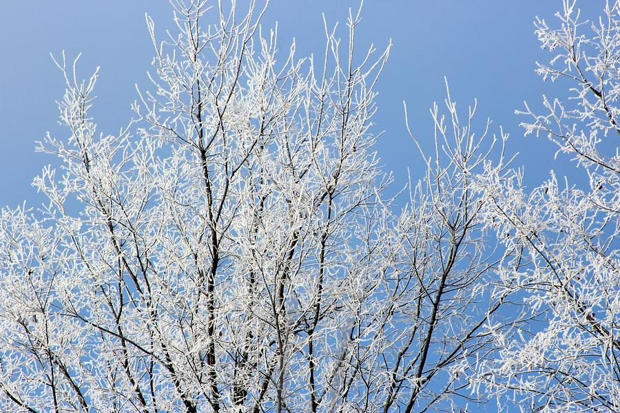 Blue Skies And Frost Photograph