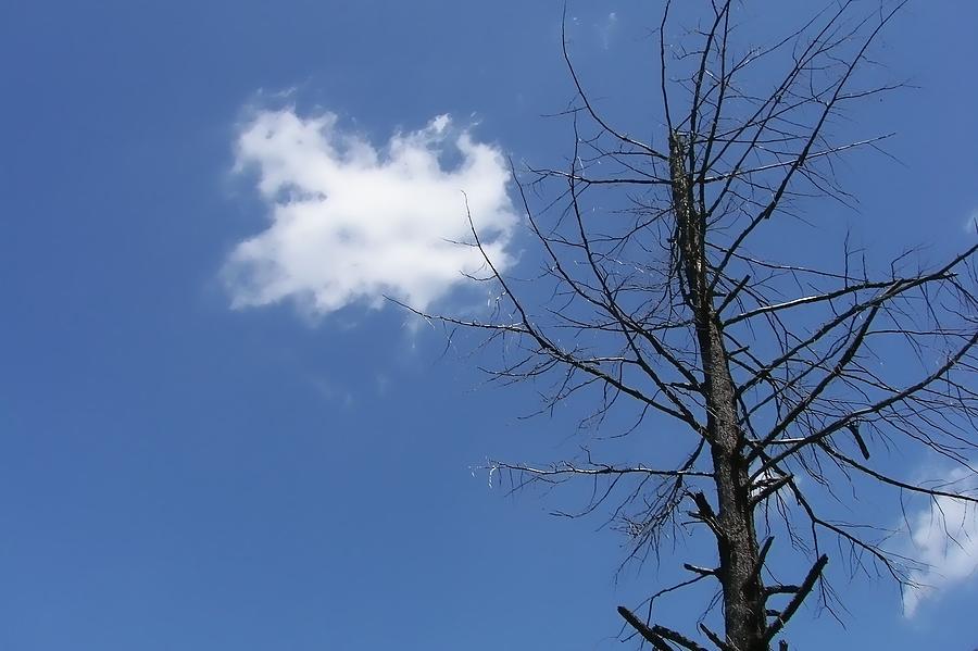 Blue Photograph - Blue Sky by JAMART Photography