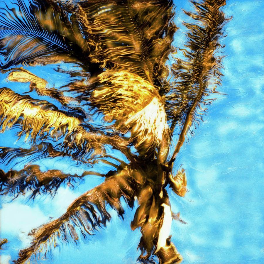 Tokarski Photograph - Blue Sky Palm by Paul Tokarski