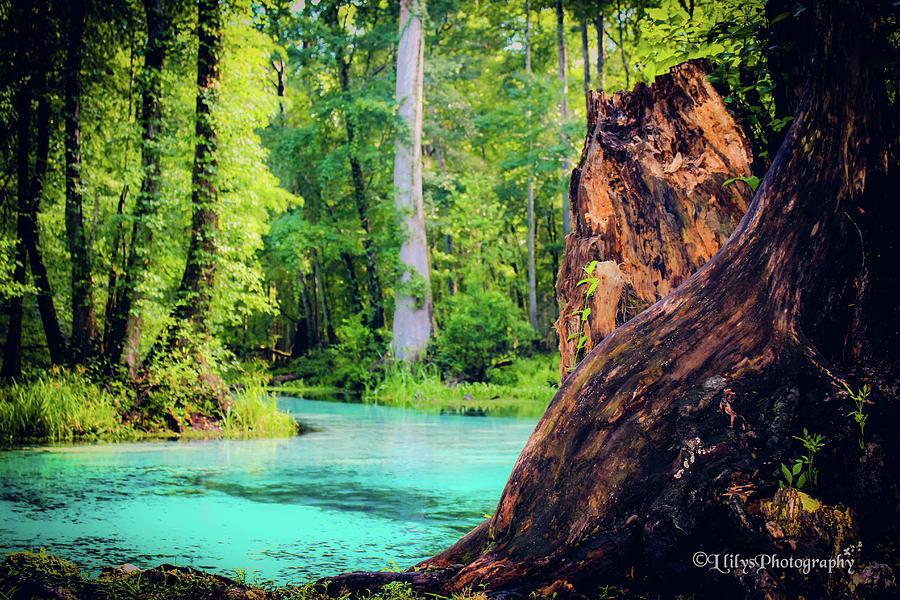 Blue Springs Photograph by Llilys Benavides