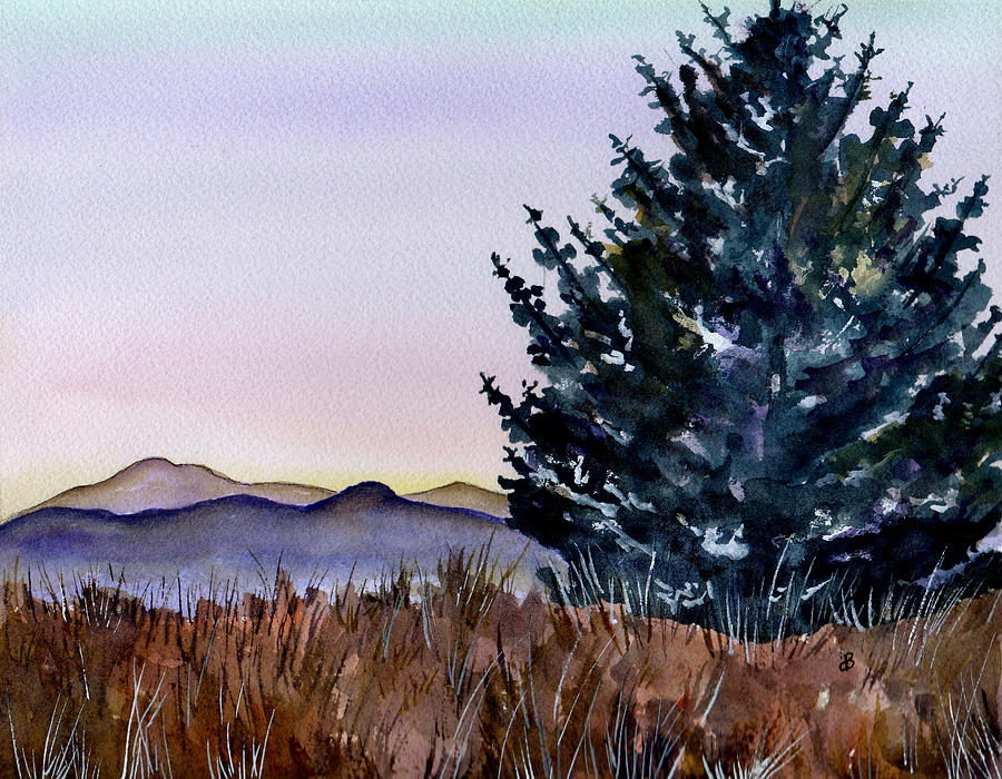 Watercolor Painting - Blue Spruce by Brenda Owen