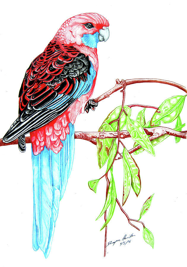 Parrot Mixed Media - Blue Tail Parrot - Green Day by Dwayne Hamilton