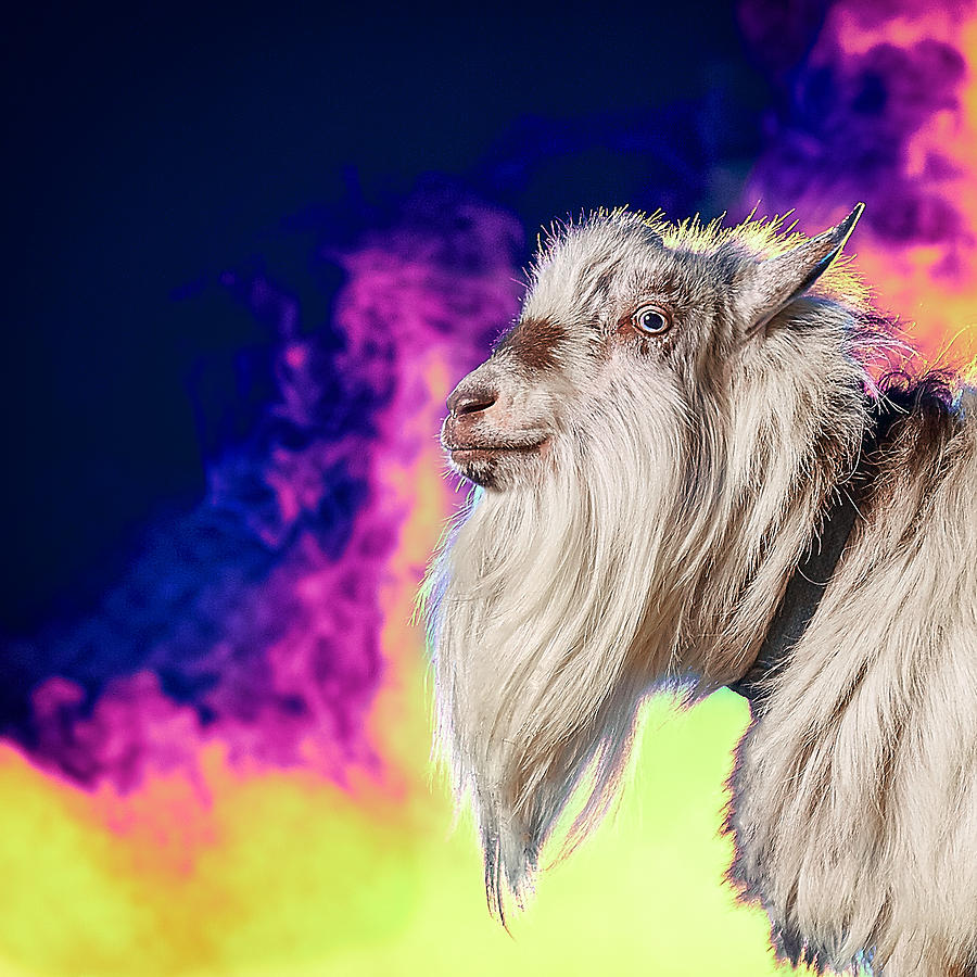 Goat Photograph - Blue The Goat In Fog by TC Morgan