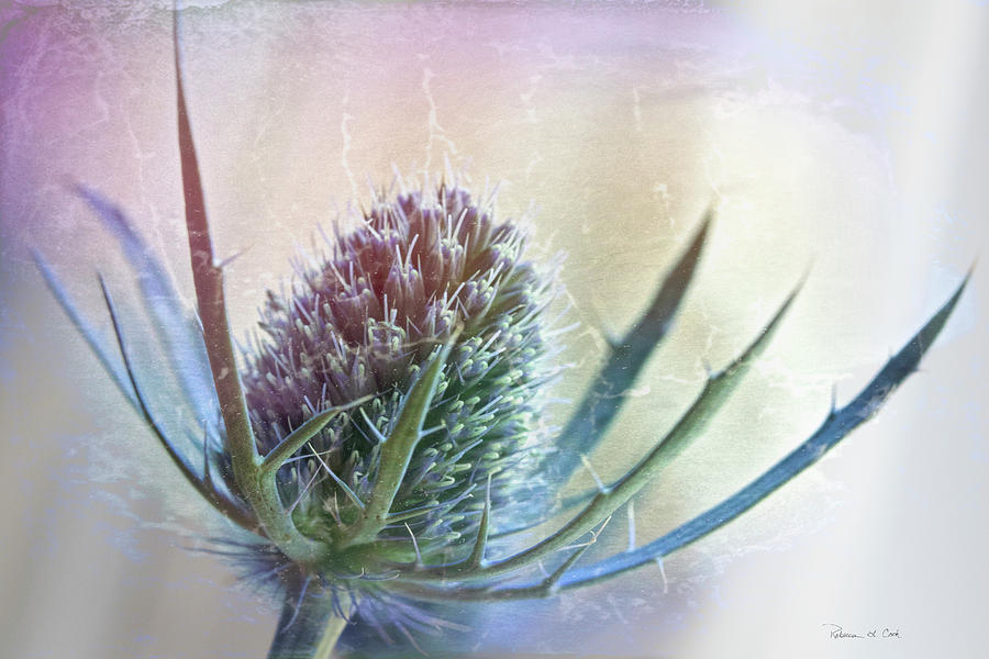 Blue Thistle by Bellesouth Studio