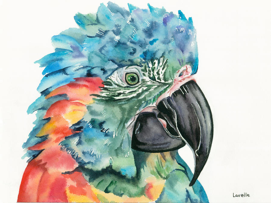 Exotic Birds Painting - Blue-throated Macaw by Kimberly Lavelle
