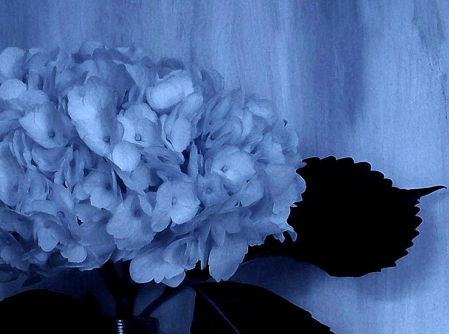 Photo Photograph - Blue Tint Hydrangea by Marsha Heiken