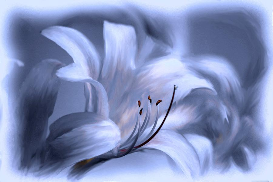 Flower Photograph - Blue Tinted Swirl Lily by Jim  Darnall
