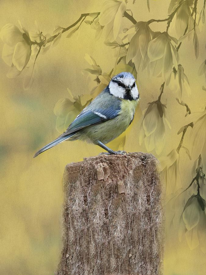 Blue Tit Bird II by Movie Poster Prints