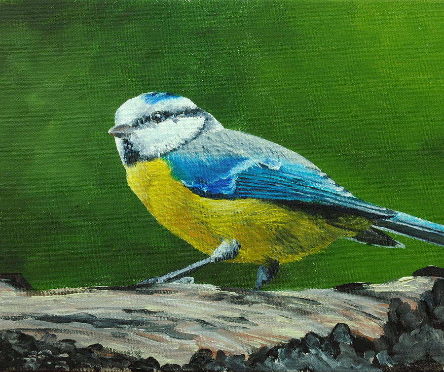 Oil Painting - Blue Tit Bird by Nolan Clark