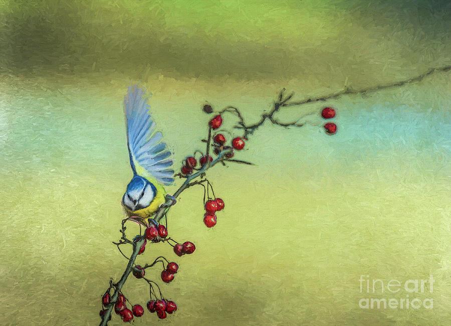 Blue Tit half-thinking of flying away by Liz Leyden