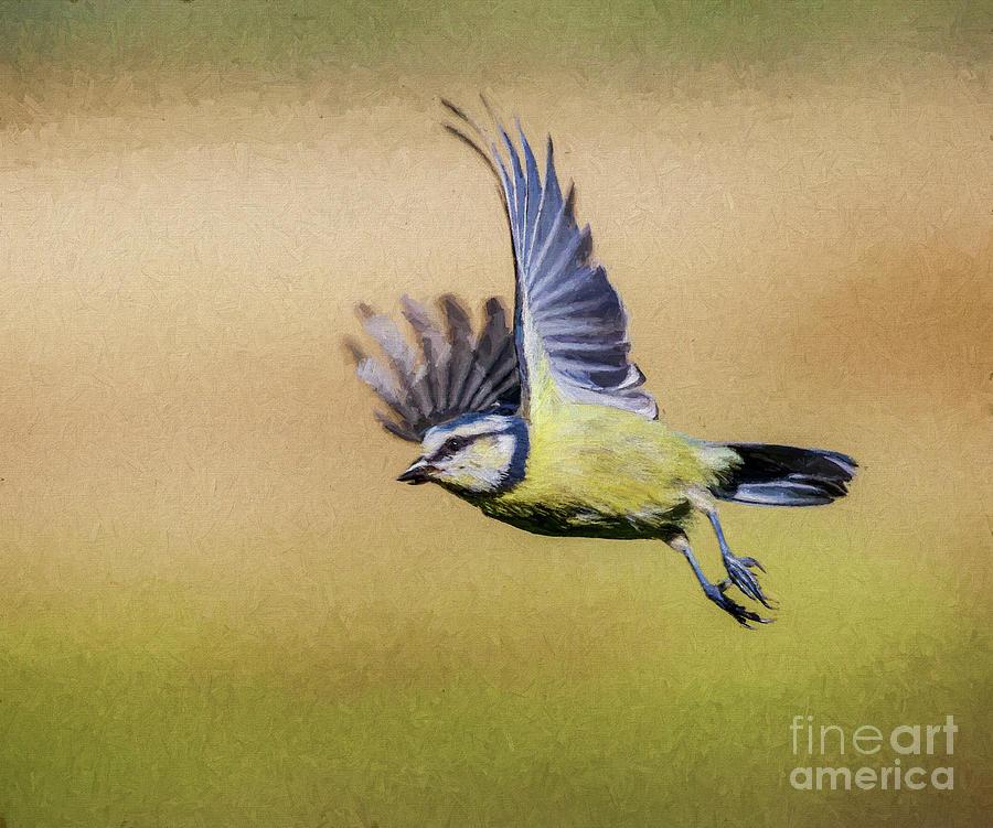 Blue Tit in flight by Liz Leyden