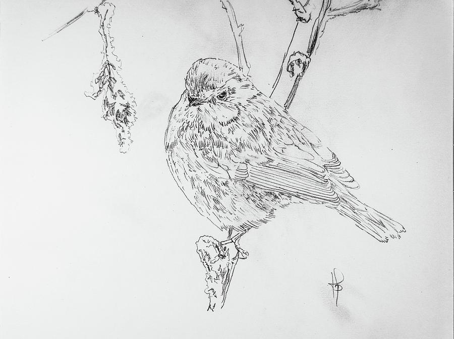 Bird Drawing - Blue Tit Winter by George Desire Herman