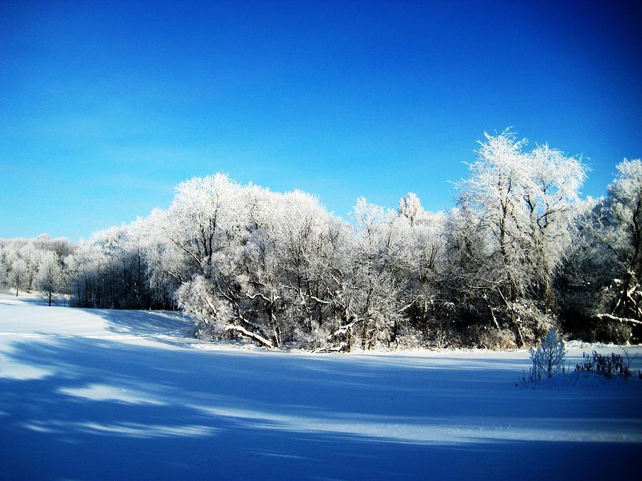 Winter Photograph - Blue by Toni Jackson