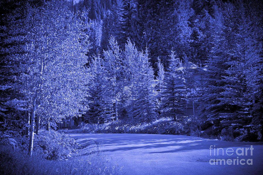 Trees Photograph - Blue Vail by Madeline Ellis