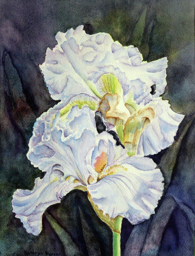 Blue Velvet - Irises by Kathryn Duncan
