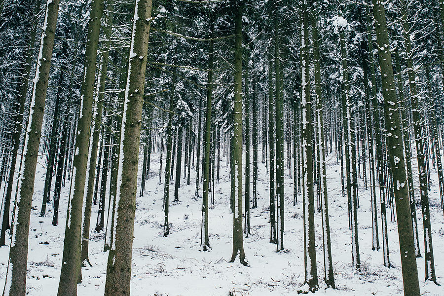 Winter Trees Photograph - Blue Winter Forest by Pati Photography