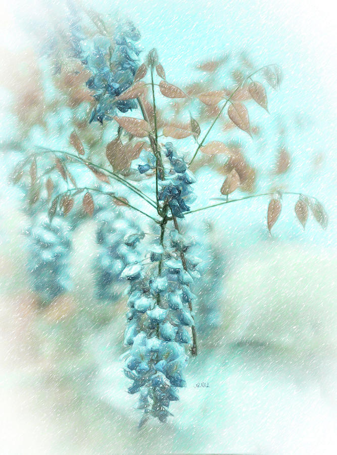 Drawing Painting - Blue Wisteria by Angela Stanton