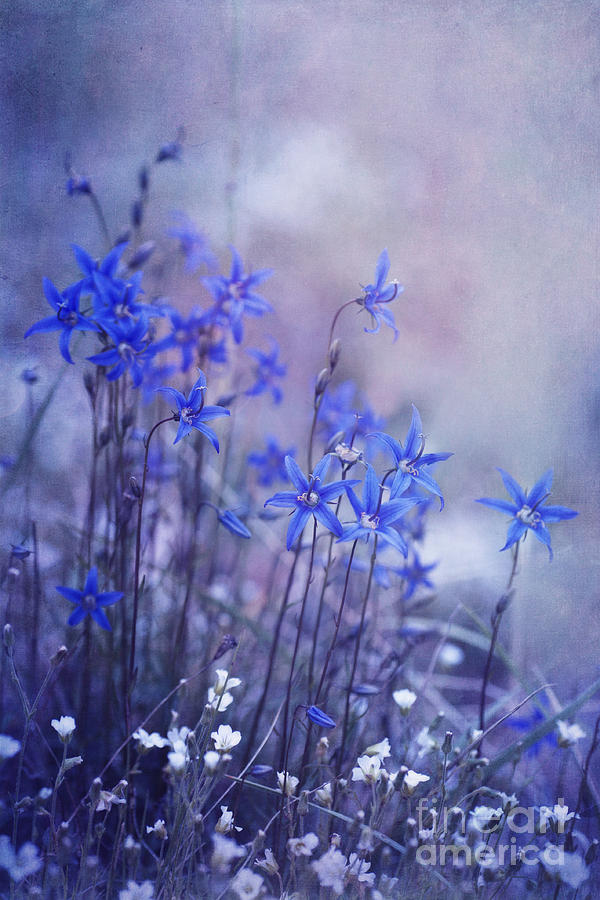 Bellflower Photograph - Bluebell Heaven by Priska Wettstein