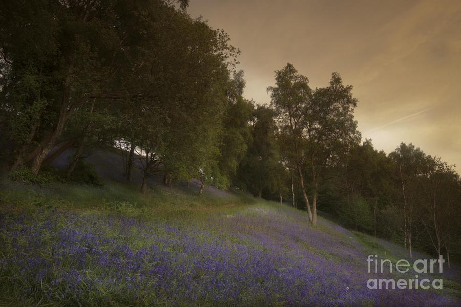Bluebell Photograph - Bluebells by Angel Ciesniarska
