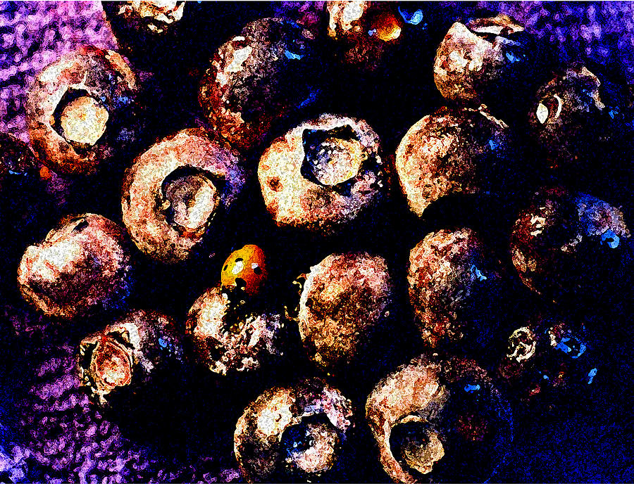 Blueberries Photograph - Blueberries And Ladybug by Nancy Mueller