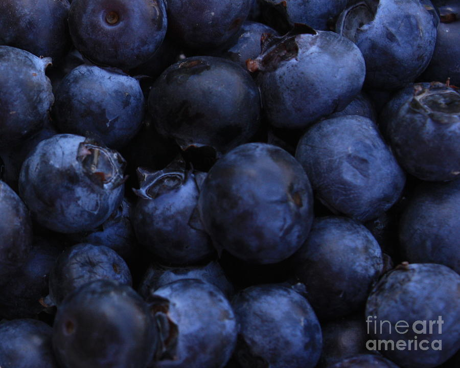 Blueberries Photograph - Blueberries Close-up - Horizontal by Carol Groenen