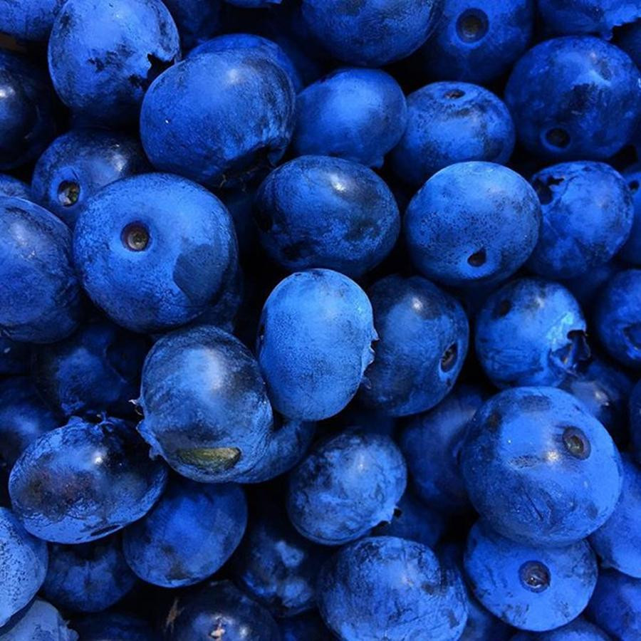 Food Photograph - Blueberries Freshly Picked Tasmania by Paul Dal Sasso