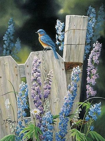 Landscape Drawing - Bluebird by Janet Moss