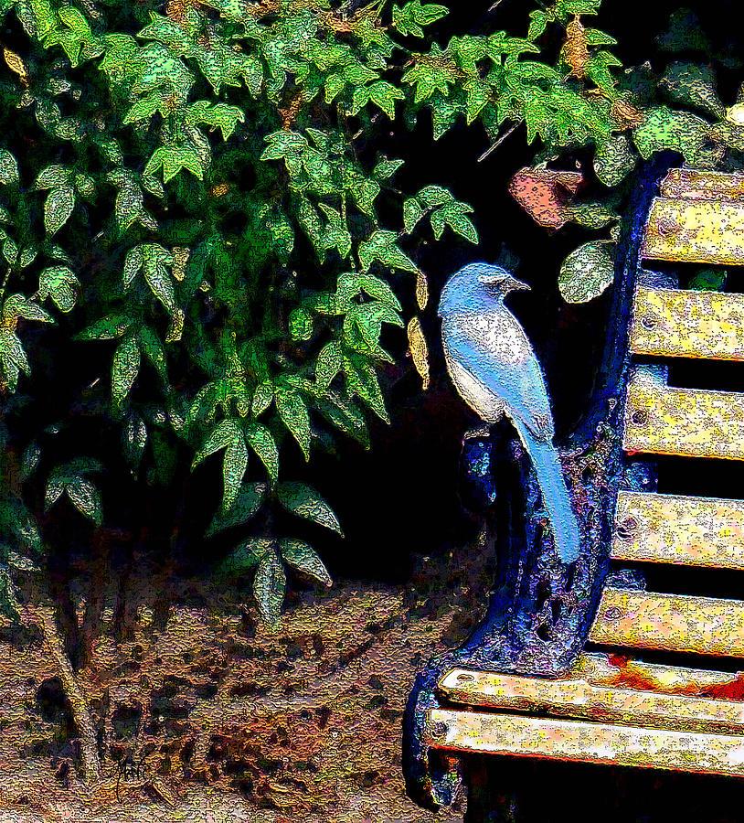 Bluebird On A Bench Photograph