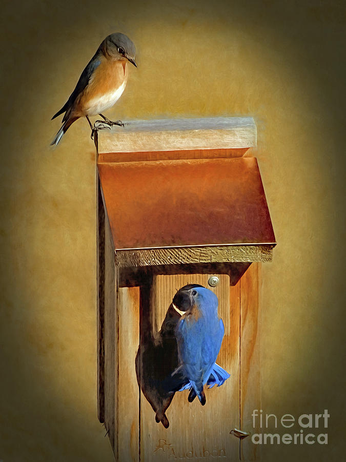 Bluebird Parents by Sue Melvin