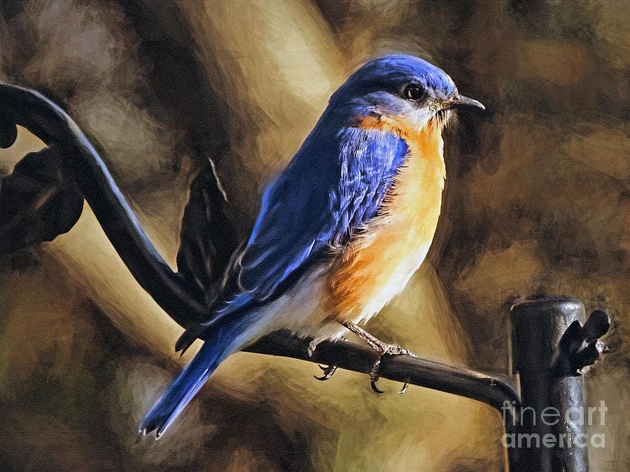 Bluebird Portrait by Sue Melvin