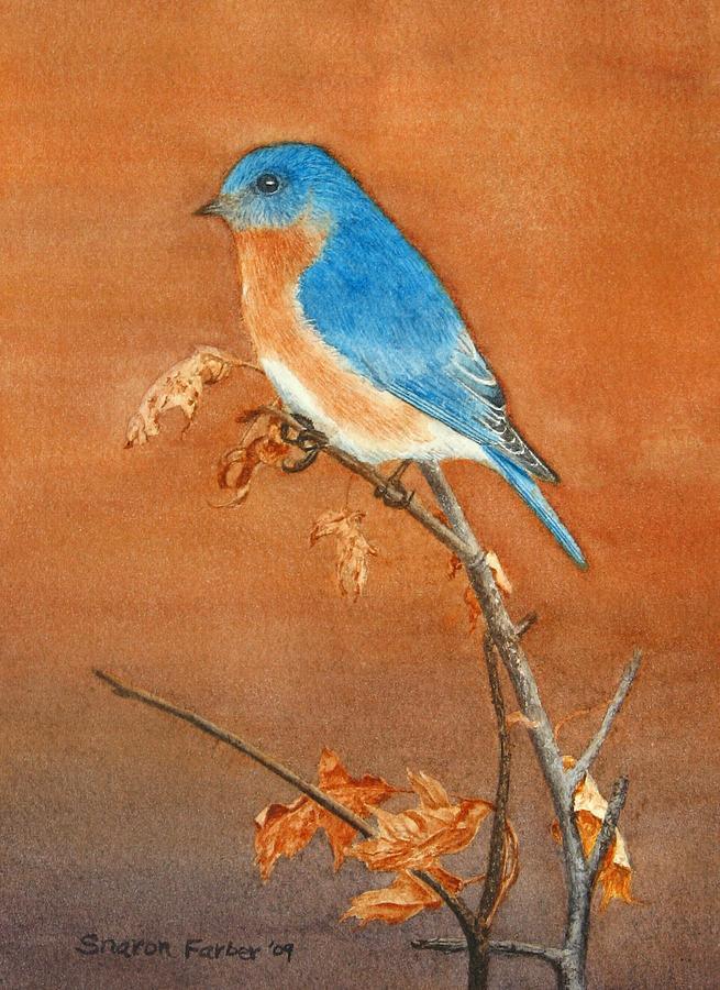 Bird Painting - Bluebird by Sharon Farber