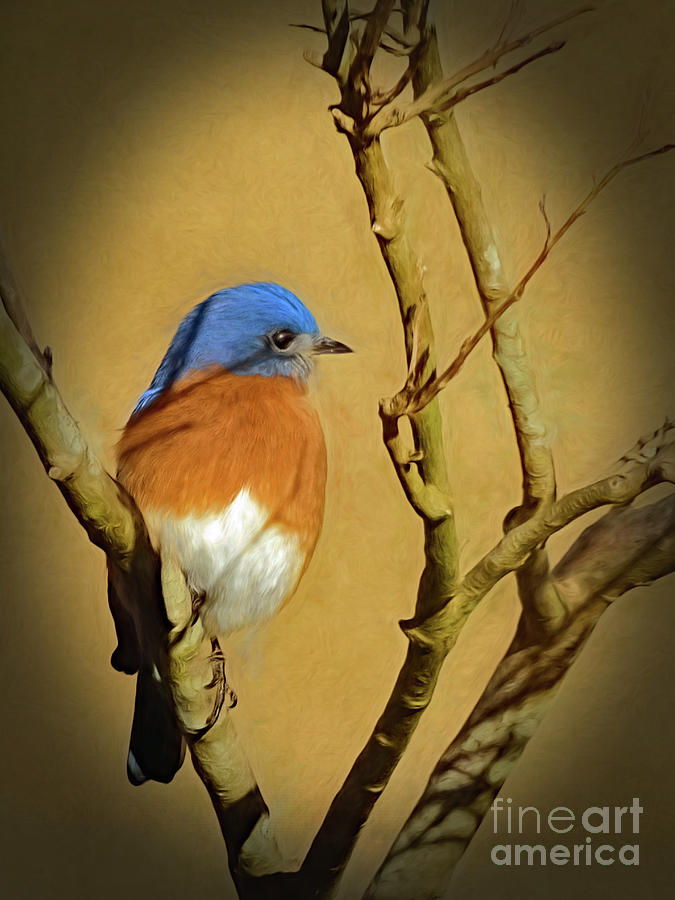 Bluebird Waiting For Spring by Sue Melvin