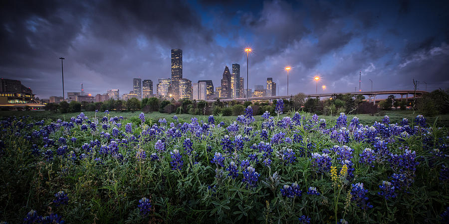 Bluebonnet Houston by Chris Multop