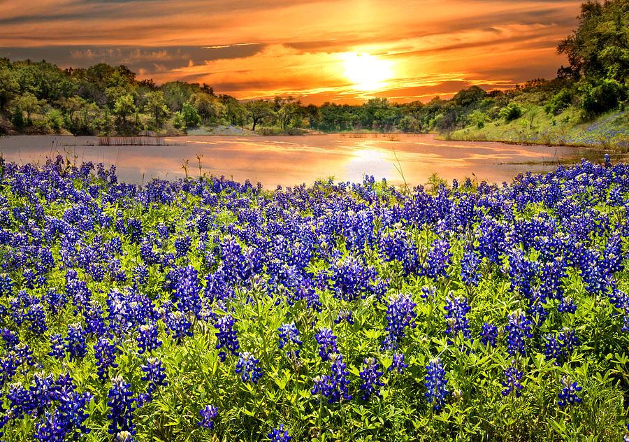 Bluebonnets Photograph - Bluebonnet Sunset  by Lynn Bauer