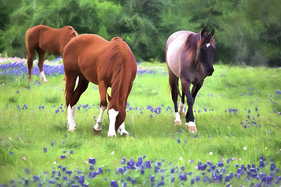 Bluebonnets Photograph - Bluebonnets And Horses by JC Findley