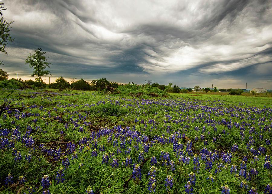 Bluebonnets Photograph - Bluebonnets awaiting the storm by Roy Nierdieck