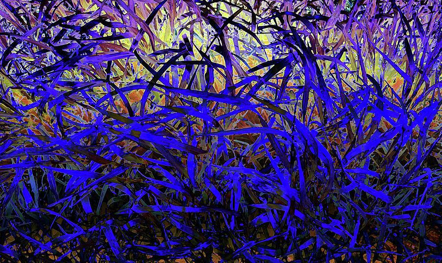 Grass Photograph - Bluegrass by David Pantuso