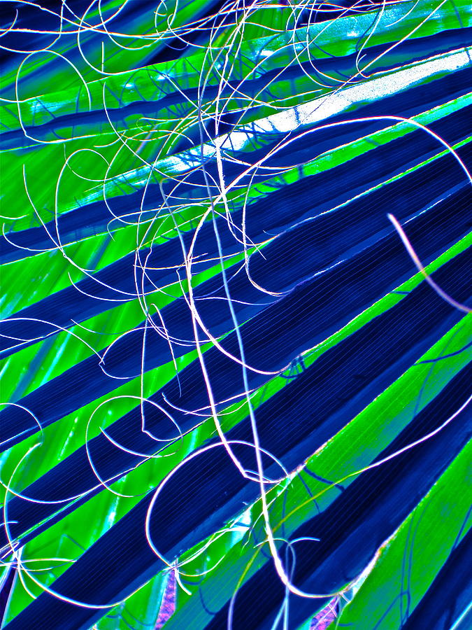 Photograph Photograph - Bluegreen Palm Fun by Gwyn Newcombe