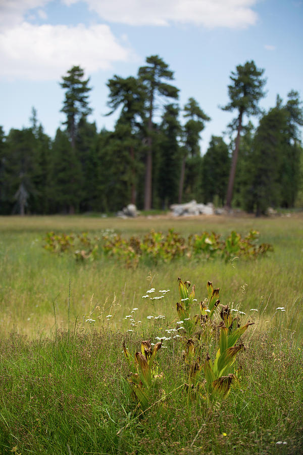Landscape Photograph - Bluff Lake Ca Wild Flowers 4 by Chris Brannen