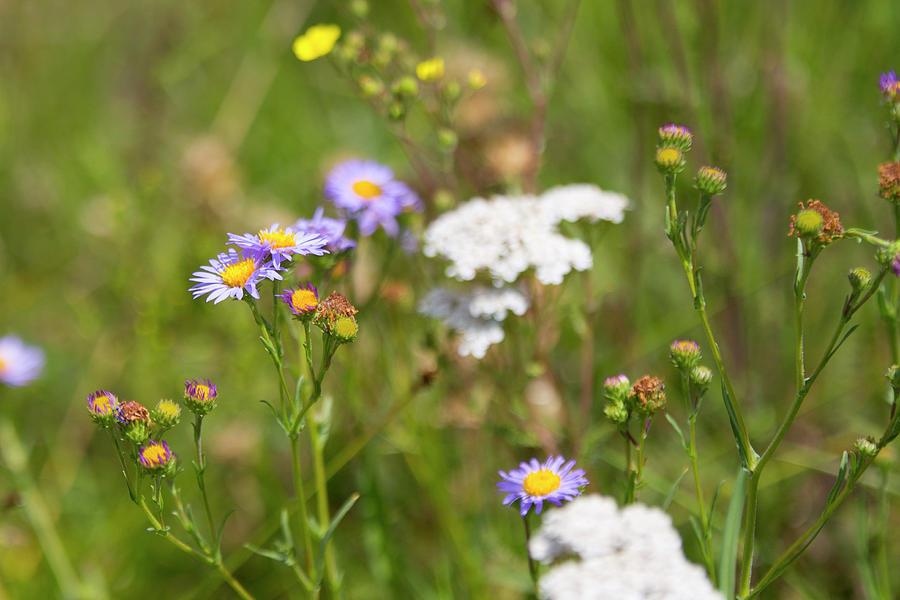 Landscape Photograph - Bluff Lake Ca Wild Flowers 6 by Chris Brannen