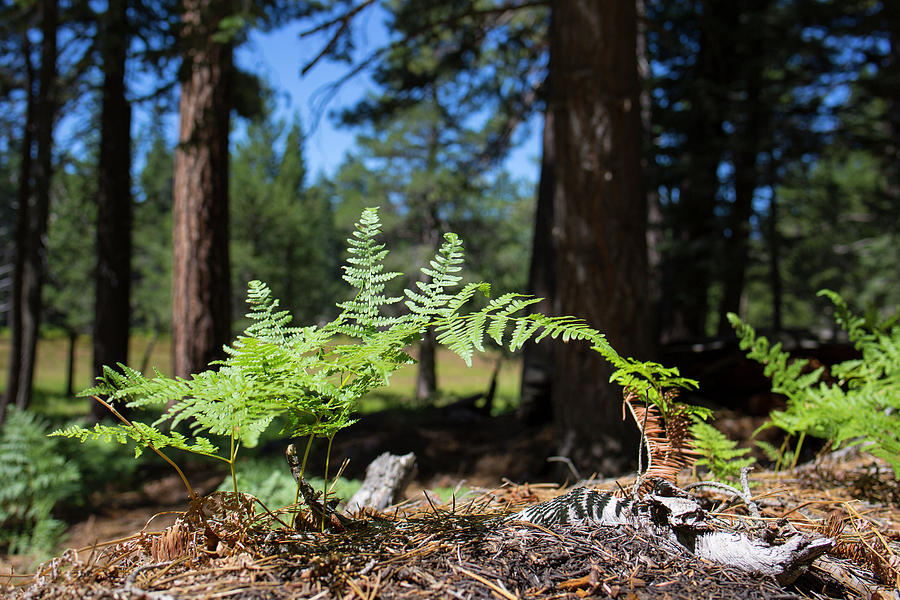 Landscape Photograph - Bluff Lake Forest Foliage1 by Chris Brannen