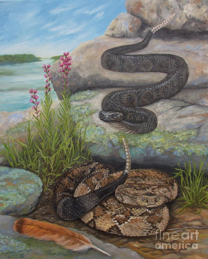 Snake Painting - Bluffside Timber Rattler  by Sherri Anderson