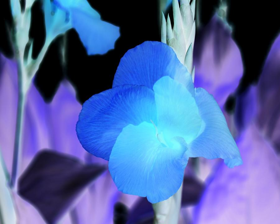Floral Photograph - Blurple Field by James Granberry